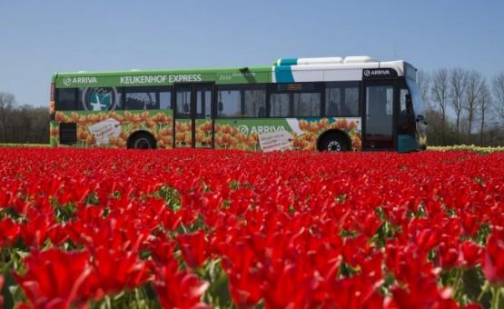 Фестиваль тюльпанов онлайн в Нидерландах
